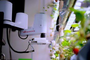 ハーベストエックスのロボットアームによるイチゴの人工授粉